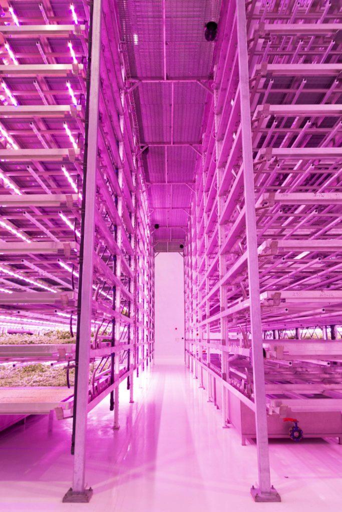 fabryka warzyw