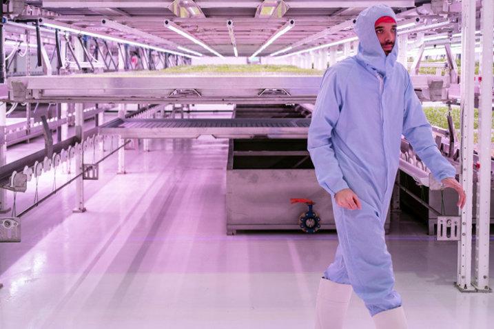 Fabryka warzyw wkrótce będzie produkować 420 ton sałaty rocznie 7