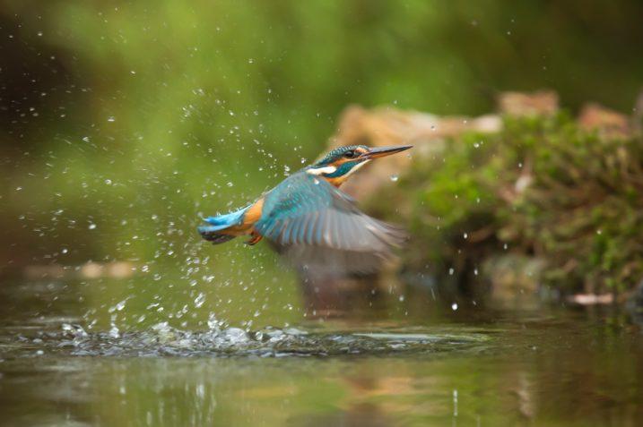 Analiza sentymentu zastosowana w badaniach naukowych. Cel: ochrona zagrożonych gatunków 13