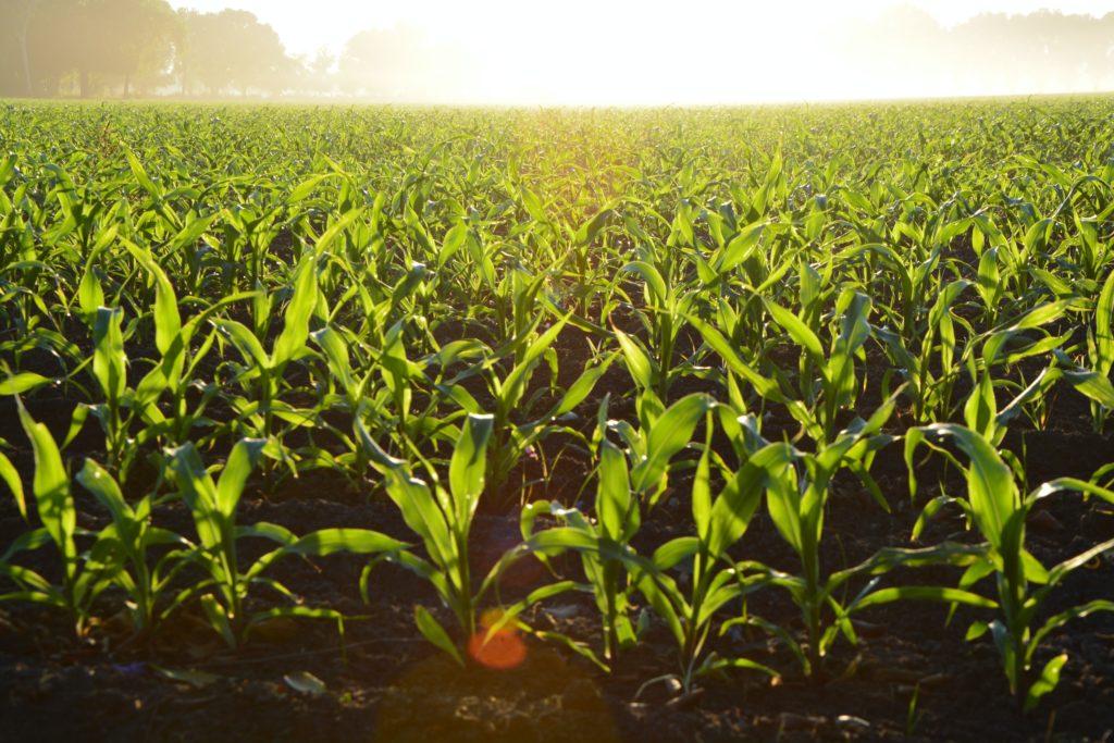 5G dla rolnictwa - o znaczeniu szybkiej i skutecznej komunikacji