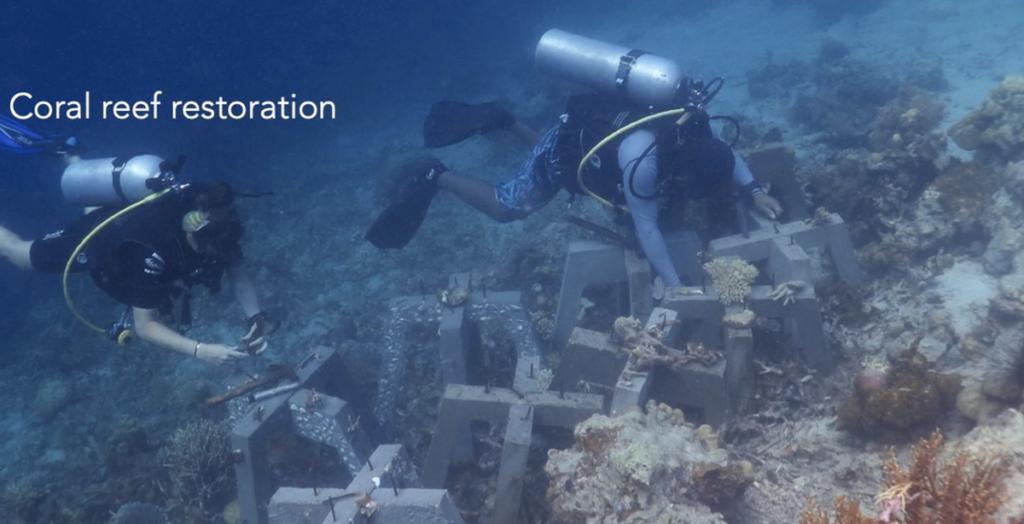 Ratowanie rafy koralowej przy wykorzystaniu narzędzi tradycyjnych i technologii AI