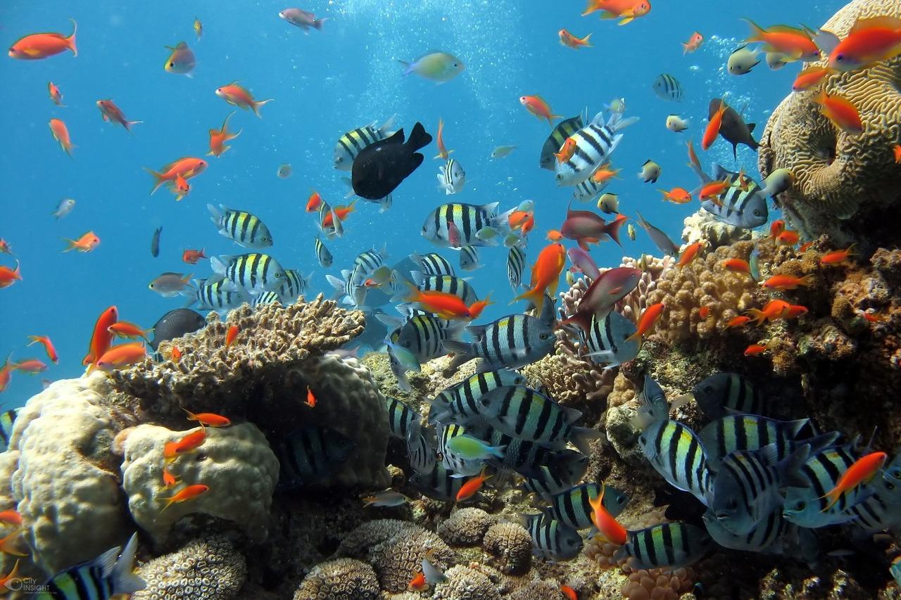 Morskie życie w rafie koralowej. Badanie przyrody przy użyciu narzędzi z AI
