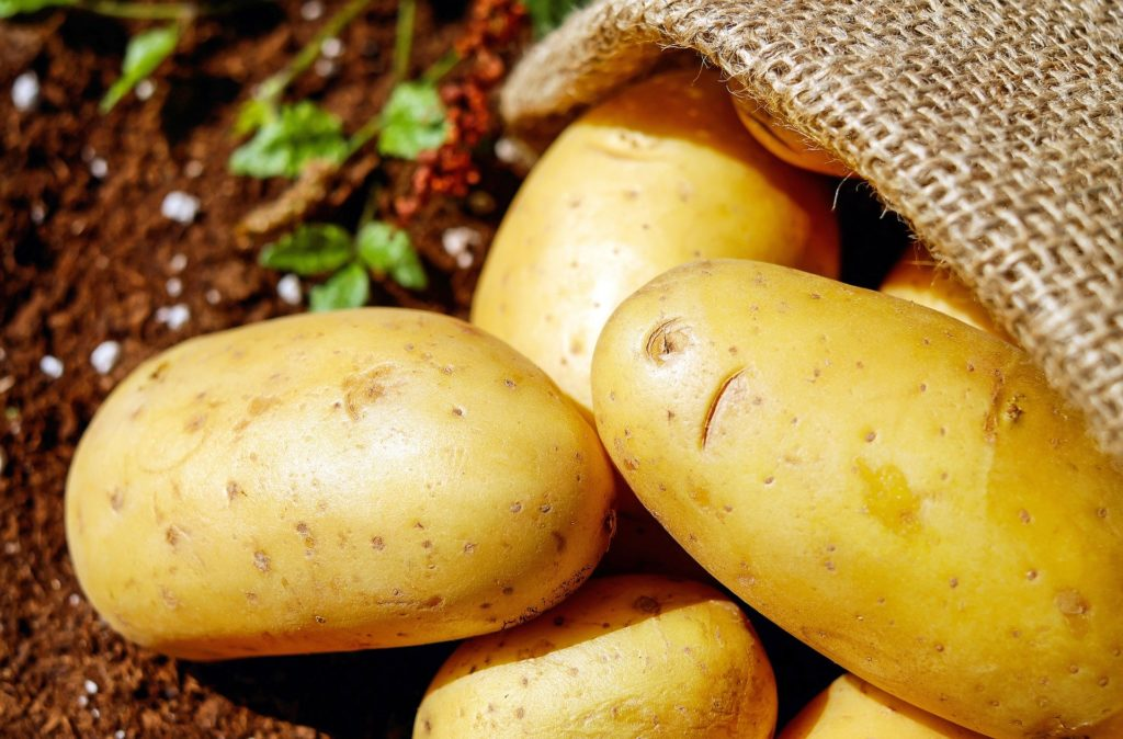 Microsoft dostarczy rozwiązania SI do ochrony polskich ziemniaków 10