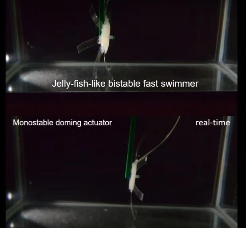 Robot-Meduza jest szybszy od zwierzęcego odpowiednika