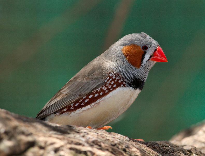 To AI rozpoznaje ptaki lepiej od człowieka. Działa wręcz odlotowo