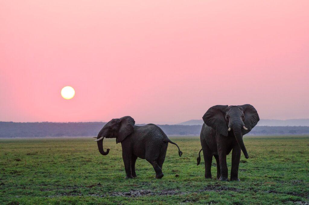 Jak AI może uratować zagrożone gatunki słoni
