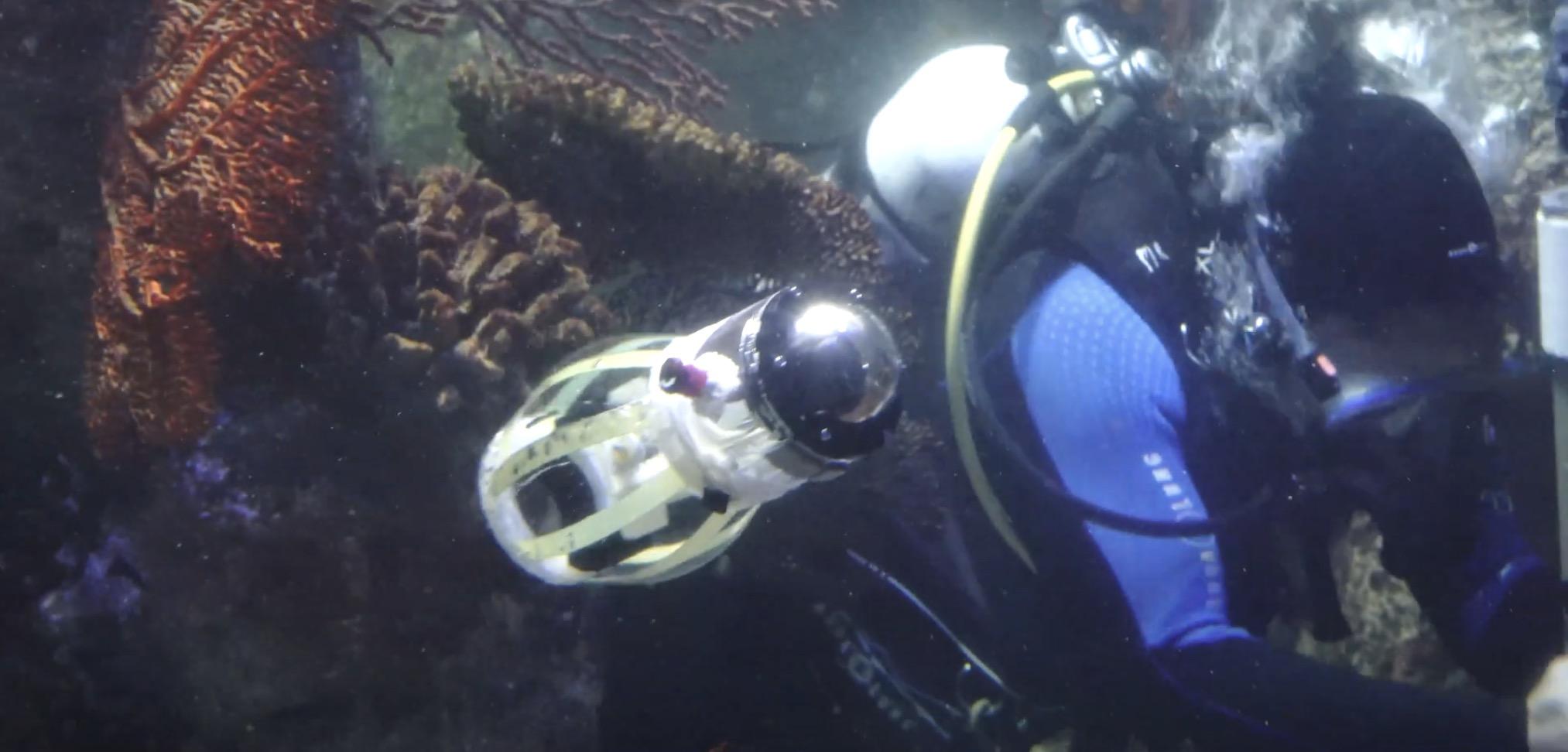 Squidbot - robot jak z Matrixa będzie badał rafy koralowe