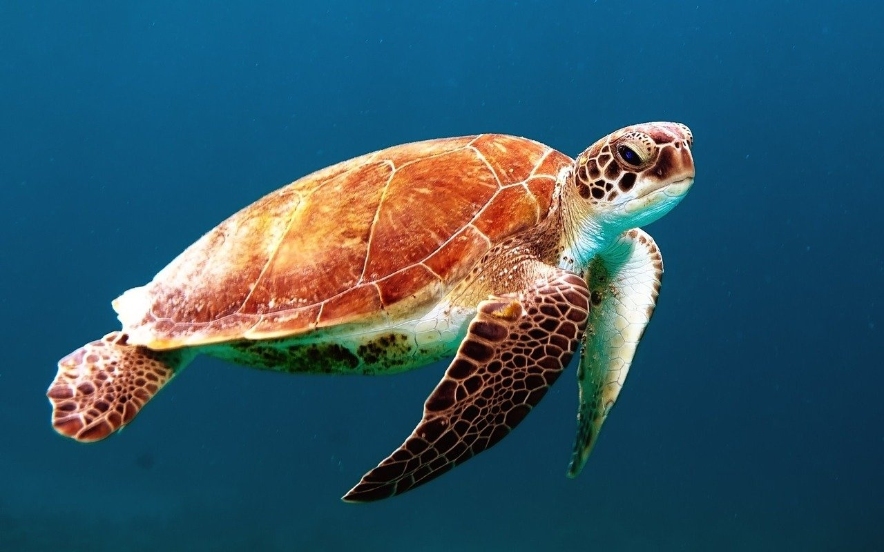 UBL ma znacznie pomóc w śledzeniu życia morskiego i prowadzenia działań, mających na celu ochronę klimatu (fot. Pixabay)
