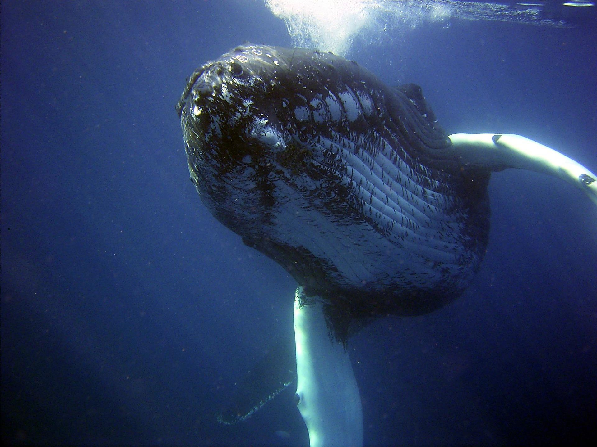 Życie morskie dalej stanowi dla nas wielką zagadkę (fot. Pixabay)