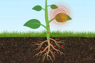 MIT: czujniki instalowane w roślinach zadbają o nasze zdrowie