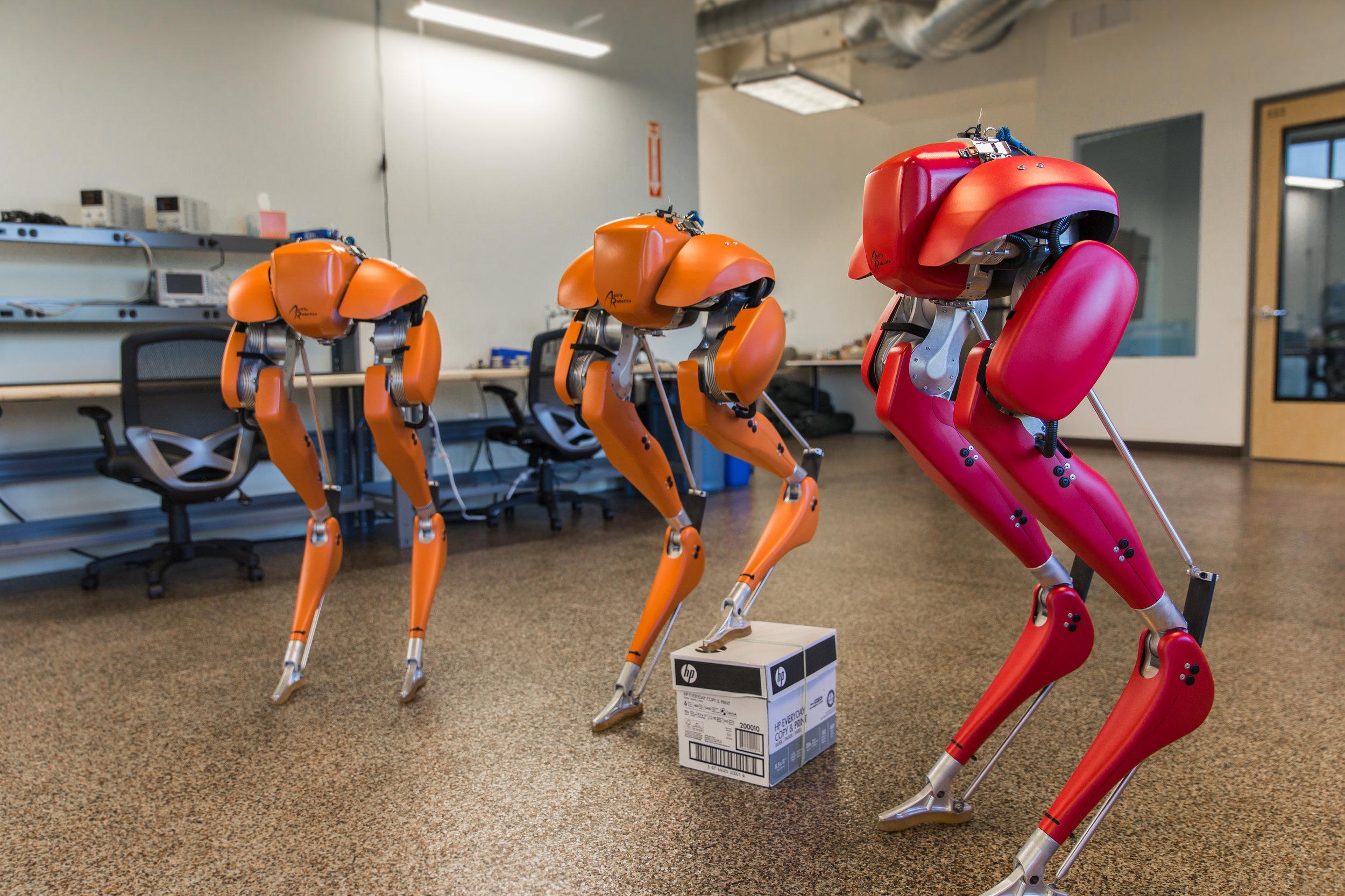 Obrazek przedstawia trzy sztuki robota Cassie autorstwa firmy Agility Robotics.