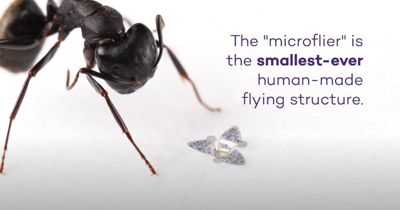 Latający mikrochip fot. Northwestern University